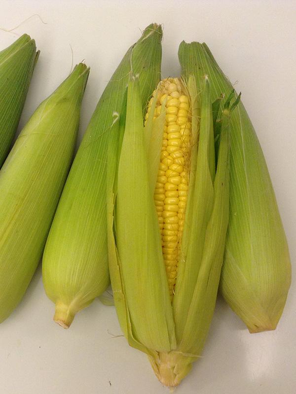 sweet corn-1