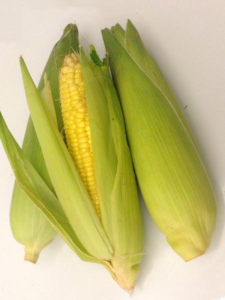 sweet corn-2