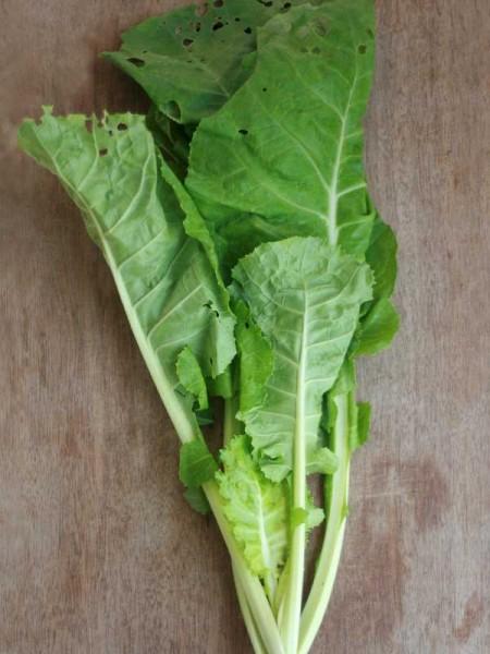 Brassica-1-1