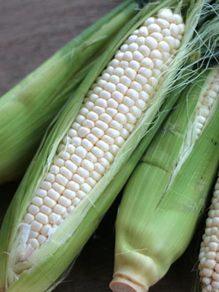 Wu's fruit sweet corn-1