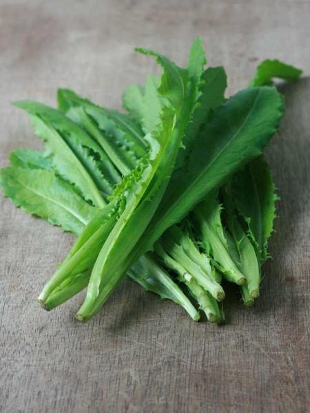 leaf-lettuce-4-1