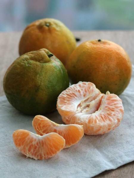 tangerine-1-1