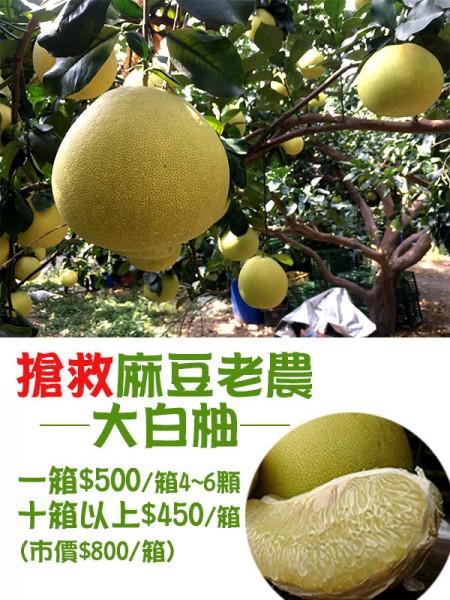麻豆大白柚-1