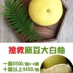 麻豆大白柚-3