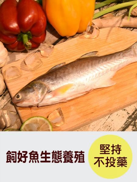 see-fish-1