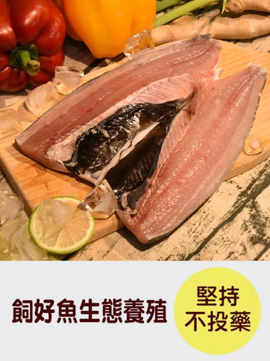 see-fish-4-1